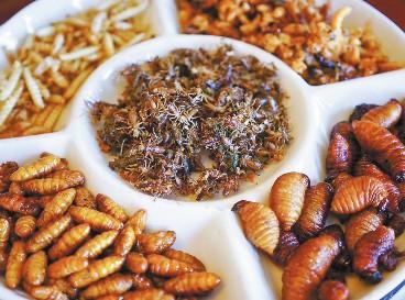 大新土司昆虫宴:焦香酥脆营养高